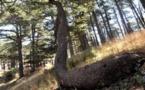 L'IMAGE DU JOUR – Dans la forêt des cèdres