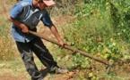 L'IMAGE DU JOUR – Enfant agriculteur