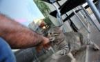 L'IMAGE DU JOUR – Le chat et son maître