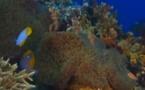 Anémones et coraux