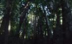 IMAGE DU JOUR - La forêt de Muir Woods en Californie