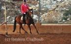 IMAGE DU JOUR – Équitation