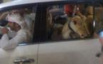 Des animaux sauvages dans les rues de Dubaï