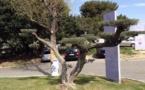 IMAGE DU JOUR: Un autre regard sur l'olivier