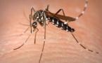 L'ennemi public n°1, c'est le moustique!