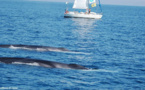 La Convention ACCOBAMS en faveur des mammifères marins