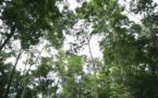 Un logiciel gratuit pour améliorer la surveillance des forêts