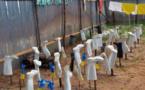 Ebola, un nouveau défi pour l'Afrique