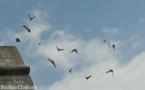L'IMAGE DU JOUR: Pigeons