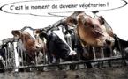 Les éléveurs français en colère