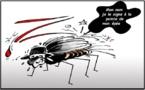 Le moustique tigre signe Zika
