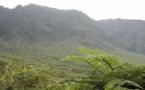 L'île du nomade bafoué, l'île de la Réunion