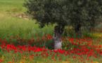 Ce que les petites fleurs des champs révèlent...