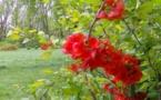 La foire surprises ouvre la porte du printemps