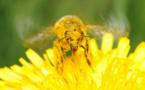 Biodiversité: les députés au secours des abeilles