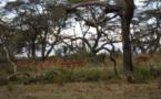 Nord-Kivu: des groupes armés font la loi dans le Parc National des Virunga