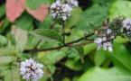 Des plantes contre les gaz