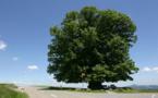 Planter des arbres pour demain