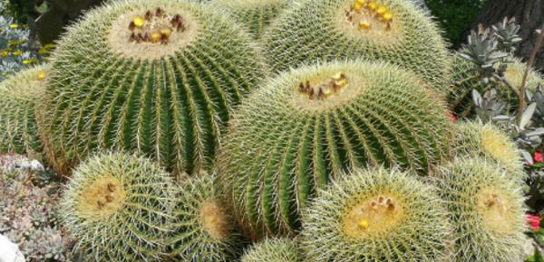 Découverte des cactus - 1