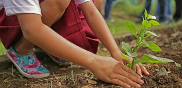 La semaine du jardinage pour les écoles 2017