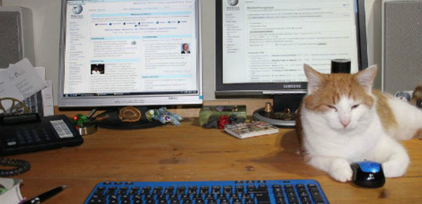 Les chats, un rempart au burn-out professionnel?