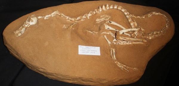 Découverte du premier dinosaure semi-amphibie