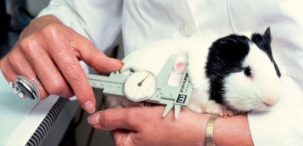 L'expérimenation animale est-elle indispensable?