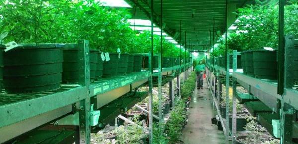 Un pas vers la légalisation du cannabis en France
