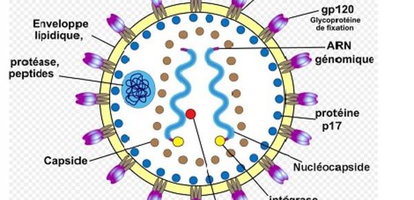 Autotests VIH, quand le dépistage s'invite à domicile
