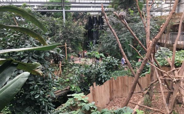 Biotropica : un jardin tropical en Normandie