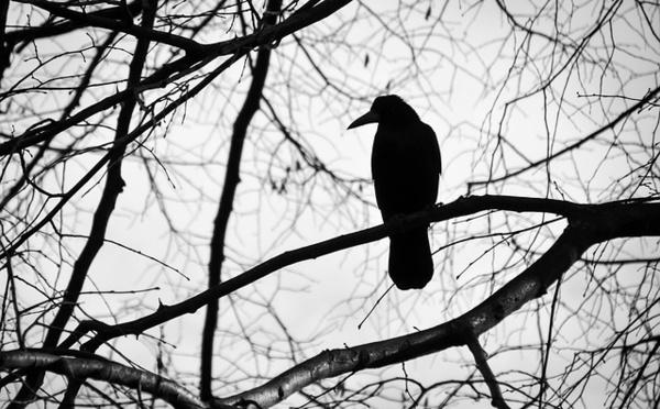 Les couleurs de l'Amazonie et la pensée en noir et blanc