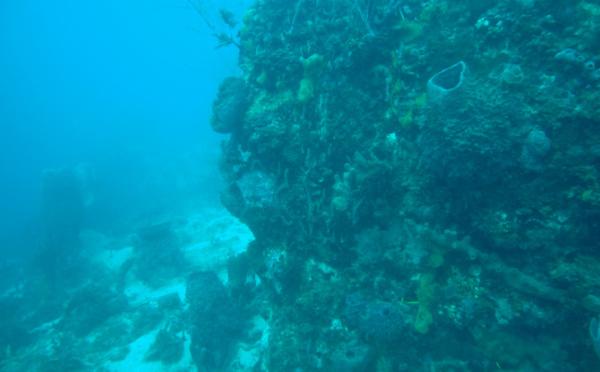 Des haut-parleurs pour sauver la Grande Barrière de Corail