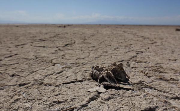 Salton Sea Lake, ou le lac repoussant toute forme de vie