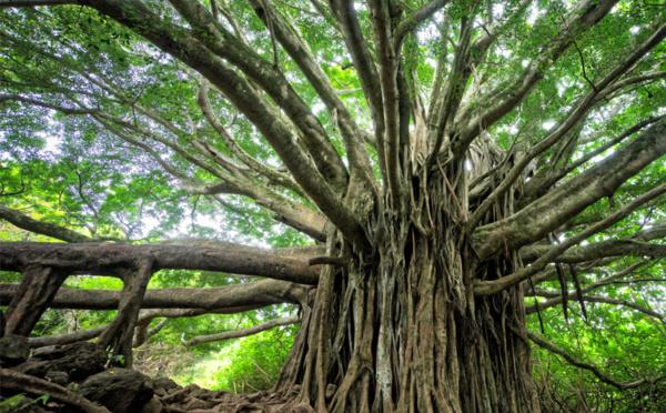 Que reste-t-il de nos mangroves ?