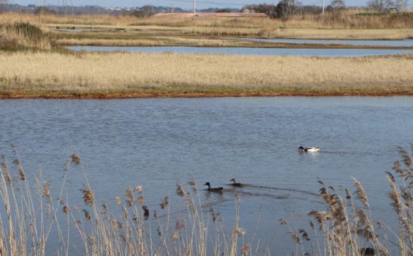 Revoir l'Estuaire de la Gironde