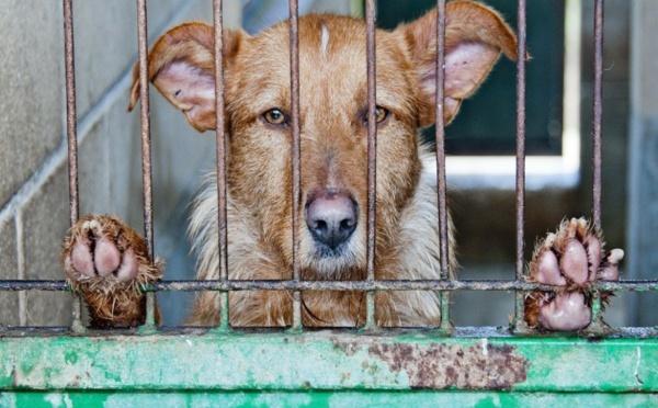 Covid-19: l'inquiétude des refuges pour animaux face au risque d'abandon