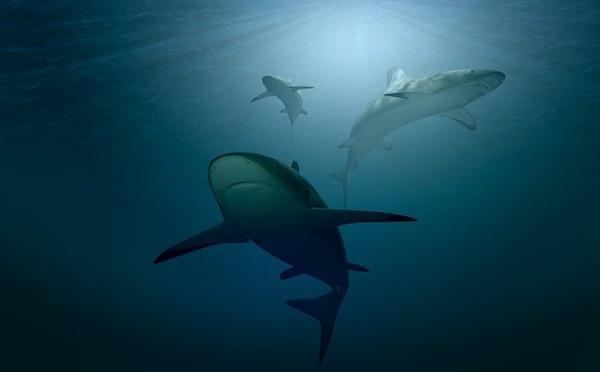 La restauration des océans possible, seulement si nous agissons