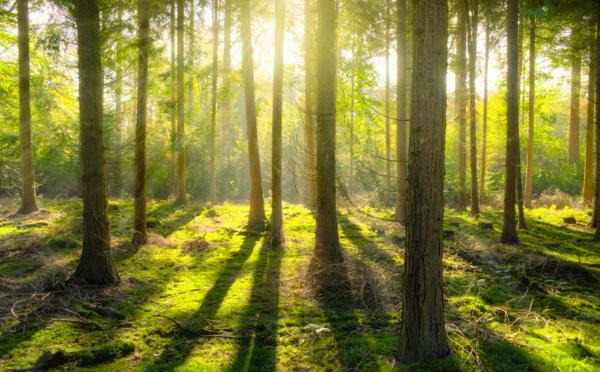 Sylvothérapie : les bienfaits de la forêt