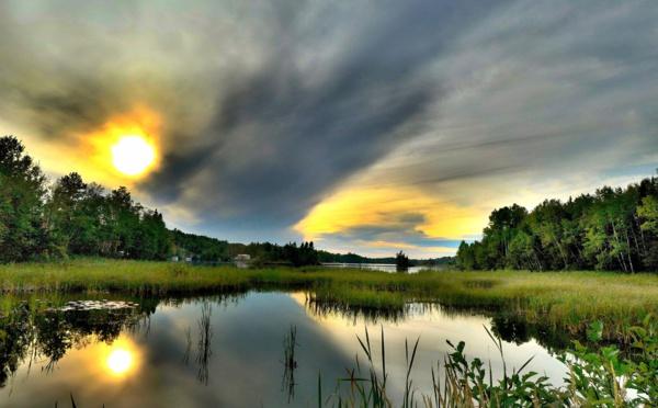 Journée mondiale de l'environnement : la biodiversité est en danger