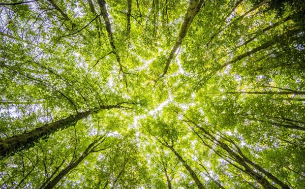 Inverser le cours de la déforestation pour préserver la biodiversité