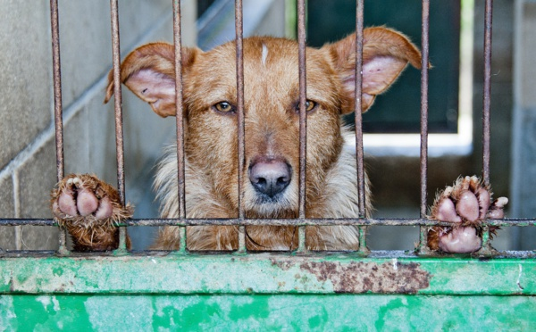 Un député propose 100 mesures pour lutter contre la maltraitance animale et les abandons