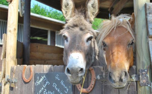 Un âne aristocrate et un sacré chacal dans une scène politique animale