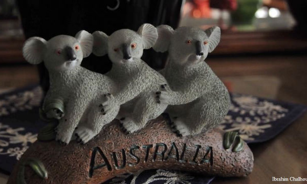 L'IMAGE DU JOUR – Décor de koala