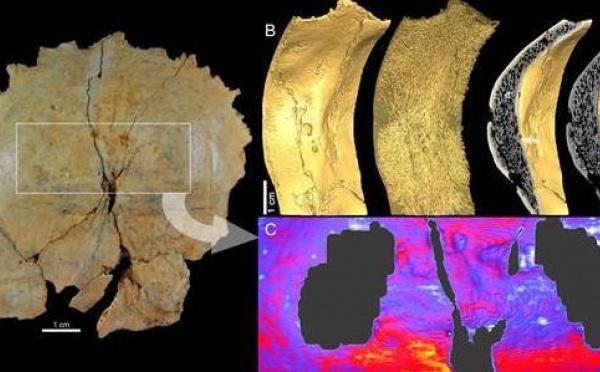 Un caractère unique des Néandertaliens caché dans leur crâne
