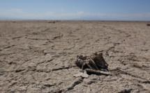 Carcasse d'oiseau au bord du lac de Salton (c) Louise Guthauser