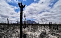 Voici à quoi ressemble le bush australien après l'incendie (c) Terri Sharp/pixabay