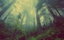 Les écosystèmes menacés par l'hypercroissance (c) Pixabay