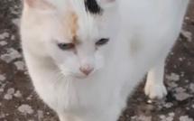 En France Il y a plus de 14 millions de chats dans les foyers! Ici Ibiza qui refuse de poser ! (C) F. Mazouard