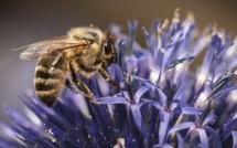 Les néonicotinoïdes s'attaquent au système nerveux des abeilles. (c) bebopeloula sur Foter.com / CC BY-NC-ND